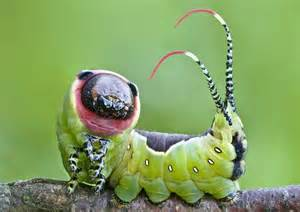 colorful caterpillar dunia 10 most beautiful and colorful caterpillars