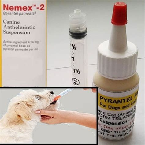 pyrantel pamoate for puppies pyrantel pamoate suspension deworming for cats and dogs