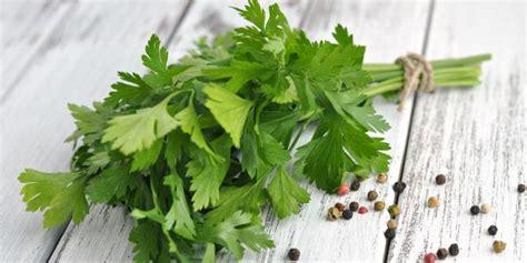 tanaman obat herbal penghancur batu ginjal  tanaman