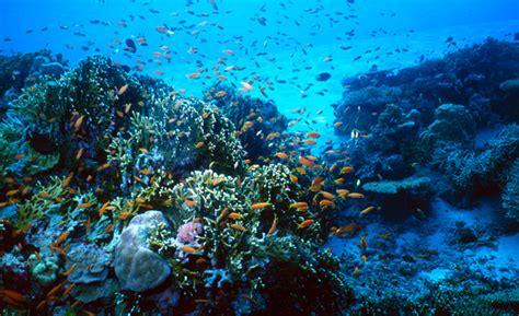 imagenes de la vida bajo el mar el mar como sistema abierto aspectos que influyen en la