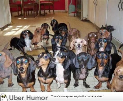 dachshund puppies for sale upstate ny dachshund rescues ny merry photo
