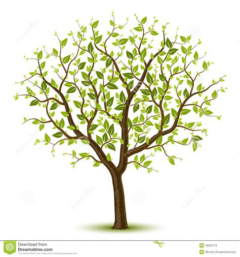 Tree With Green Leafage Stock Vector Illustration Of Summer 18222179 Family Tree Stock Images Royalty