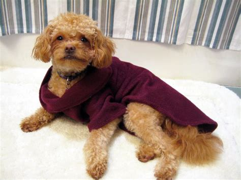snuggie for dogs snuggie for dogs