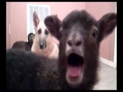 usher goat usher yeah goat edition youtube