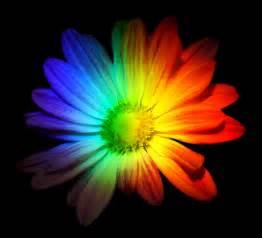 How To Put Flowers In A Vase Rainbow Flower By Sagethollen On Deviantart