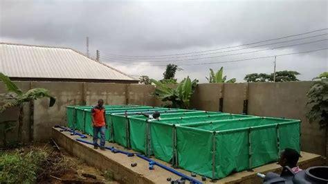 sle business plan on fish farming how to start tilapia fish farming in nigeria naija ng