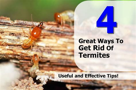 Ways To Get A by 4 Great Ways To Get Rid Of Termites
