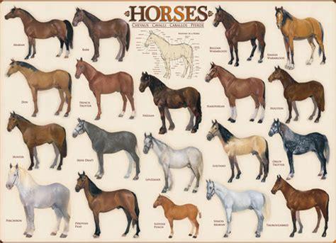 free printable horse jigsaw puzzles horses jigsaw puzzle puzzlewarehouse com
