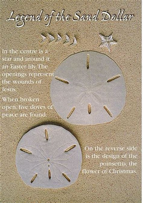 how to write on sand dollars for wedding place cards 452 best images about seashell driftwood glass ideas crafts on starfish sea