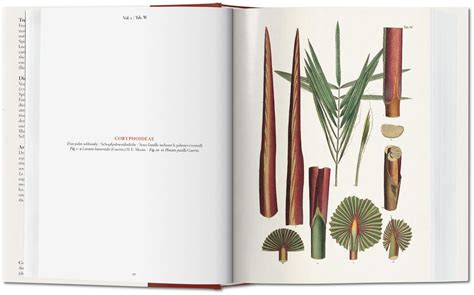 ko martius the book of martius the book of palms gallery taschen books bibliotheca universalis