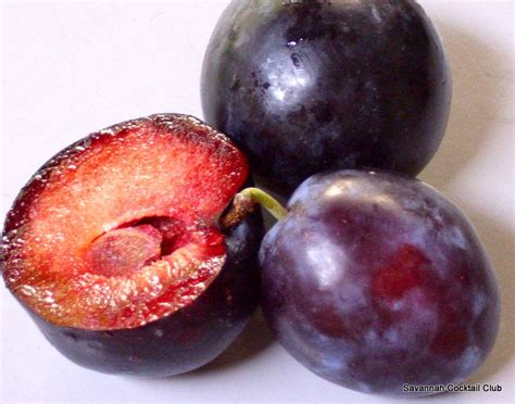 the earth of india all about plum in india