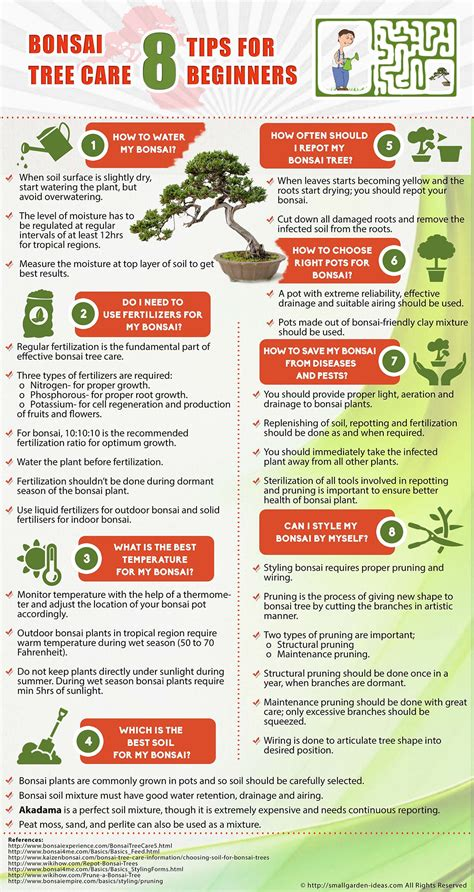 bonsai tree care  tips  beginners infographic