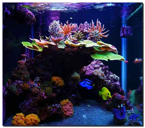 17 best ideas about reef aquascaping on reef