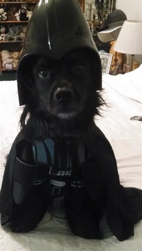 pug darth vader costume the is strong in these pets baxterboo