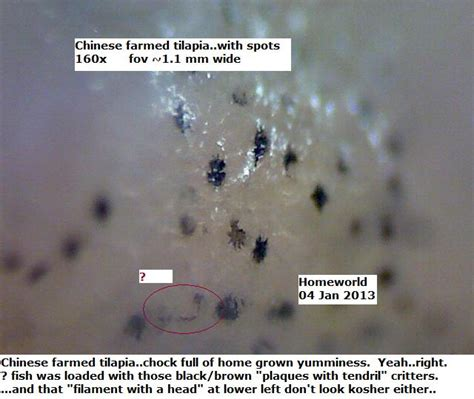 how you get morgellons disease chinese farmed fish at morgellons disease forum with