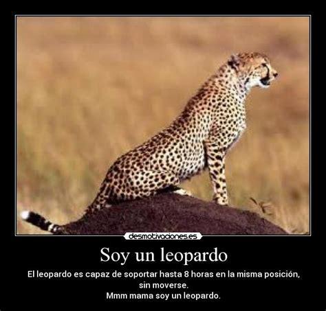 imagenes fondo de pantalla leopardo soy un leopardo desmotivaciones