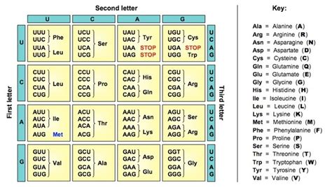 Genetic Code Table by Opinions On Genetic Code