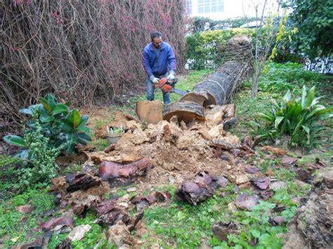 pulizia giardini pulizia prati aiuole e giardini napoli