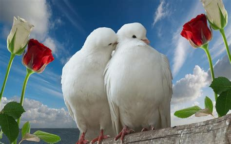 images of love birds incredible images love birds high resolution