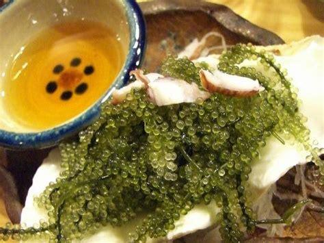 latoh caulerpa sejenis rumput laut alkisah ubi jelo