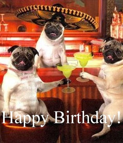 Pug Birthday Meme - happy birthday for more funny b day quotes and birthday