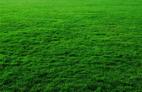 wallpaper background grass grass background free stock photo public domain pictures