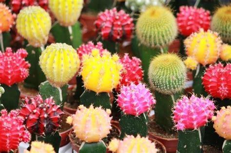 piante particolari da giardino piante grasse coltivazione piante grasse come