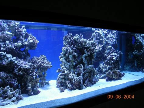 reef aquascape designs looking for ideas to aqua scape a 125 mixt reef central