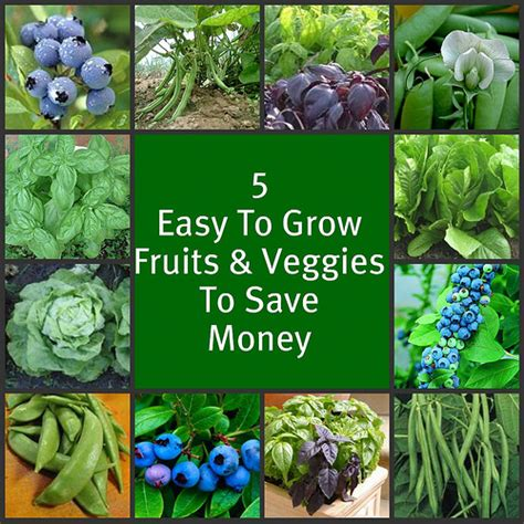 Save On Summer Produce 5 Easy To Grow Vegetables What Are The Easiest Vegetables To Grow In A Garden