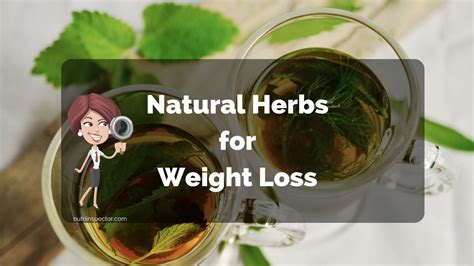 weight loss herbs 10 best herbs that will help you lose weight naturally