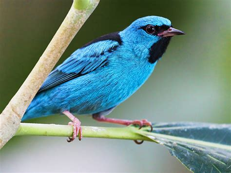 blue colored birds photo