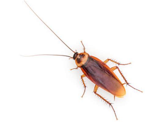Bed Bugs Bites Vs Flea Bites