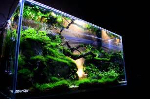 Aquarium Decoration Ideas Freshwater Benefits Of Aquarium Fish Tanks Decoration Fish Tank Best