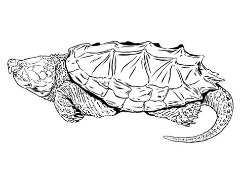 cabins in the woods grayscale coloring book books common snapping turtle missouri department of