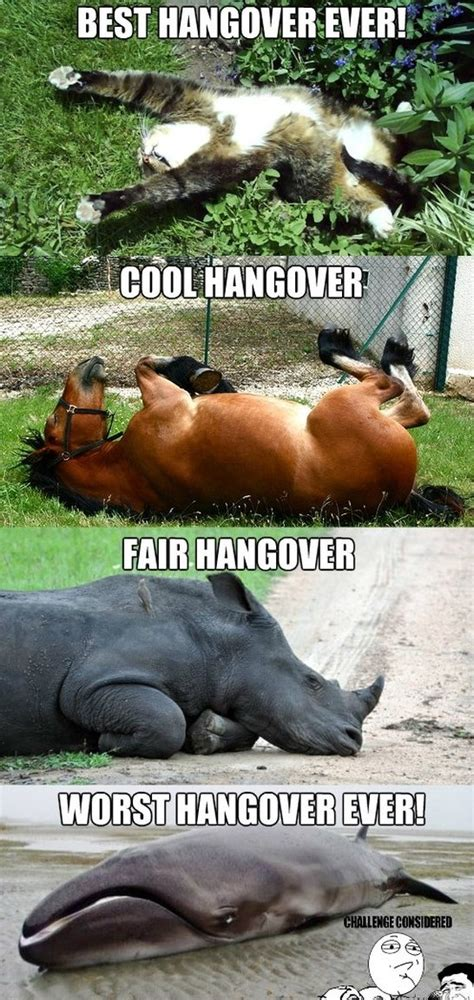 collection of funny hangover animal pictures