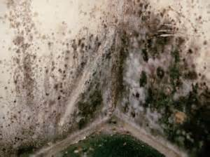 Marvelous Black Mold Removal #3: Toxic-black-mold-300x224.jpg