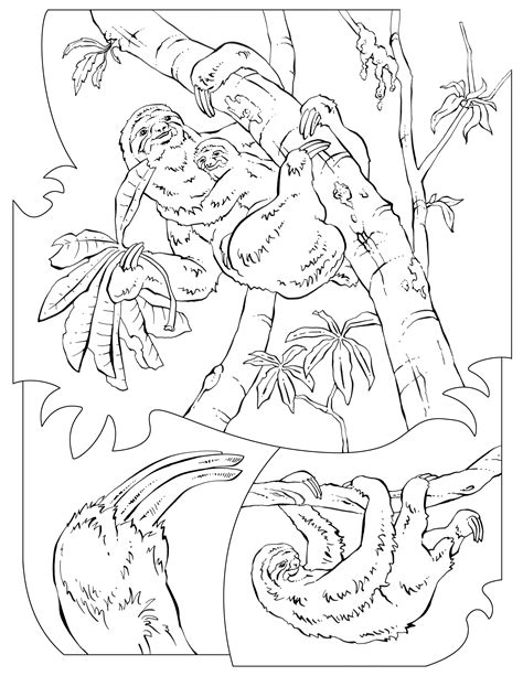 pin coloring page sloth img 16651 on pinterest