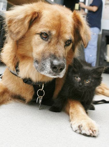 Healthylac For Puppies Kittens Isi 10 is shelter kittens newest nanny