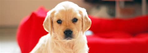 Pets At Home Small Dogs How To Puppy Proof Your House Petsmart
