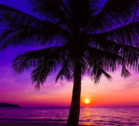 overdue in paradise the library history of palm county books beautiful sunset sunset the with tropical palm
