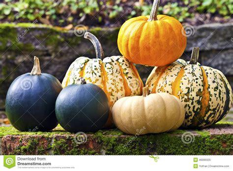 fruits et l 233 gumes d 233 t 233 le plein de vitamines alliance varietes de courges et potirons 28 images courges et