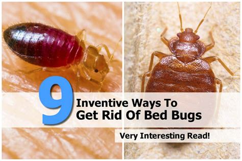 bed bug problems    rid  bed bug bites wwwe bedbugscom  rid  bedbugs today