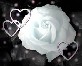 wallpaper flower white rose love loving white rose flowers wallpapers entertainment only