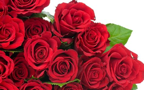 Red Rose HD Flowers Wallpapers   Flowers