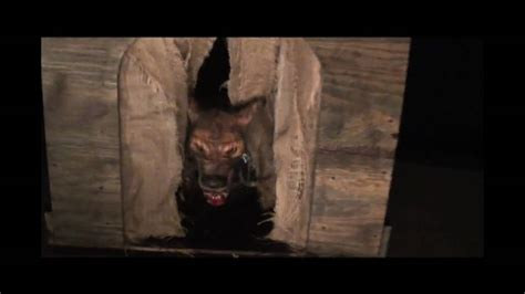 haunted dog house dd301 demon dog poisonprops com halloween haunted house prop youtube
