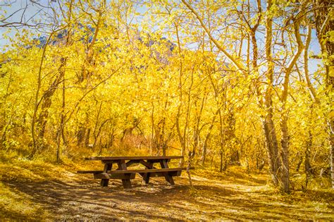 california fall color california fall color 187 eastern