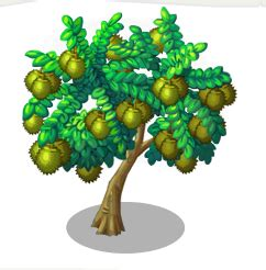 durian tree   monsters wiki fandom powered  wikia