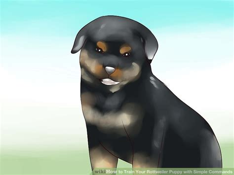 how to a rottweiler how to your rottweiler puppy with simple commands 14 steps