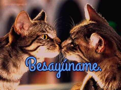 imagenes de gatitos llorando im 225 genes de gatitos tiernos y llenos de amor