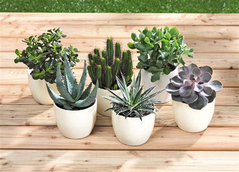 Zimmerpflanzen Die Direkte Sonne Vertragen by Zimmerpflanzen Saisonales Selbst De